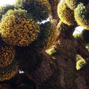 arbre boule